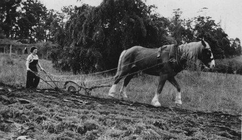 Gram and horse Wahronga