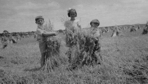 2Stooks in wheat field 2