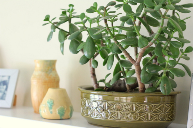 Indoor plants can improve wellbeing - little eco footprints