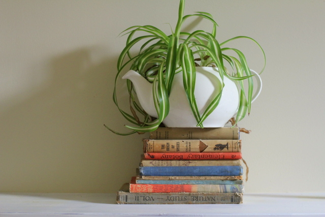 Kettle house plant on a pile of books