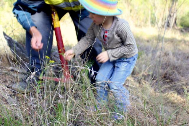 7 learning bush regeneration_weed control
