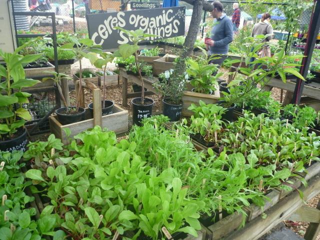 Ceres permaculture nursery organic seedlings-1