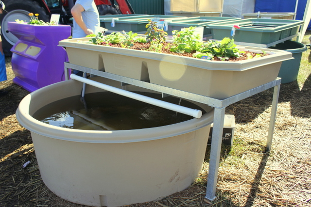 The_courtyard_system_Home_grown_aquaponics