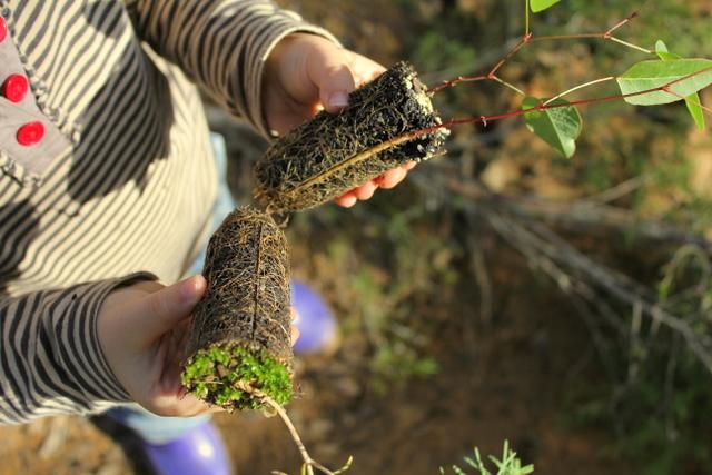 3 native plants hyco seedlings