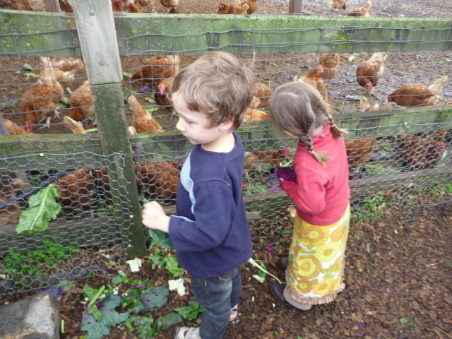 Feeding the chooks CERES-1