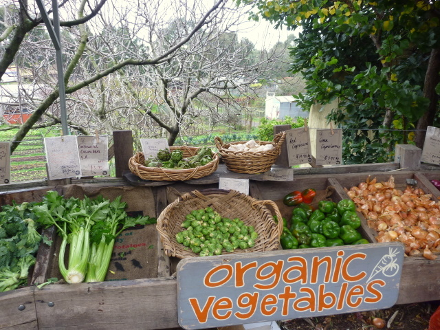 Organic food market ceres 2-1