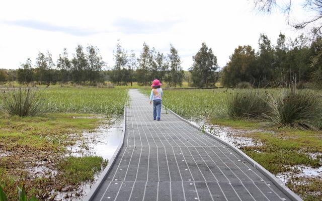 Ash island hunter wetlands national park