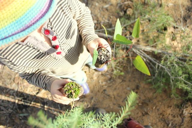 1 native plants hyco seedlings 2