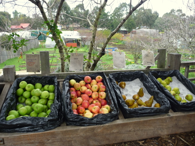 Organic food market ceres-1