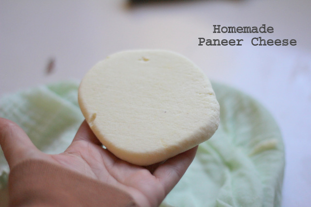 Goats milk paneer cheese-001