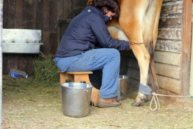 Milking Patsy