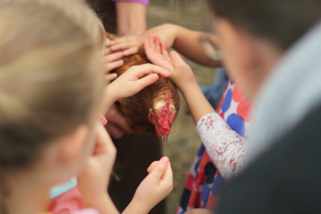 Farm birthday party patting a chook