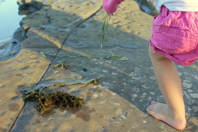 Sorting seaweed