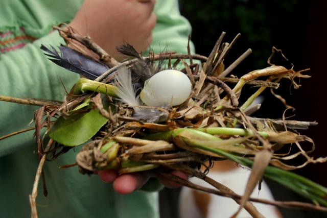 Create a birds nest