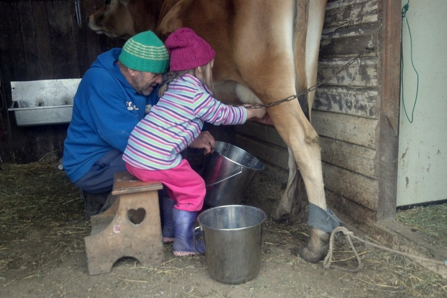 Little eco learning how to milk a cow
