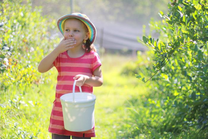 Picking Blueberries 3 Misty Valley Farm Brunkerville Tricia Hogbin