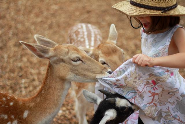 Hunter Valley Zoo 6
