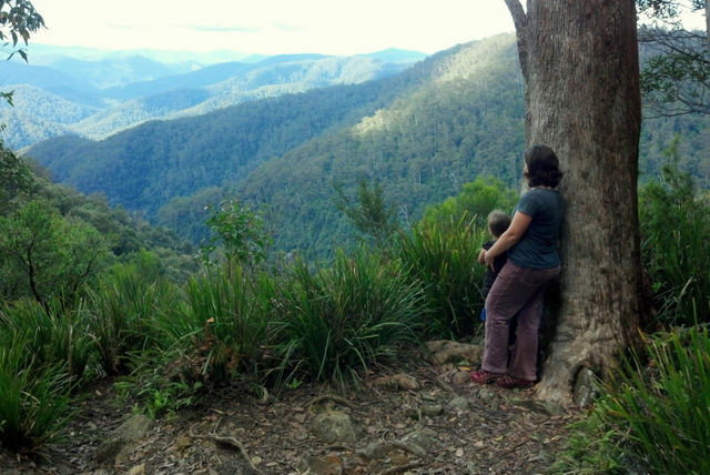 Views from Gloucester Falls Track, Barrington Tops National Park Tricia Hogbin