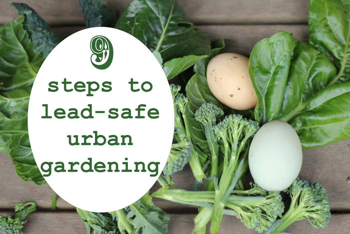 9 steps to lead safe urban gardening