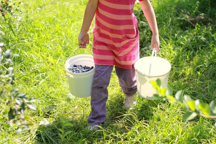 Picking Blueberries 6 Misty Valley Farm Brunkerville Tricia Hogbin