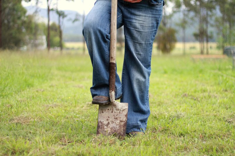 To dig or not to dig. No dig gardening versus cultivation.