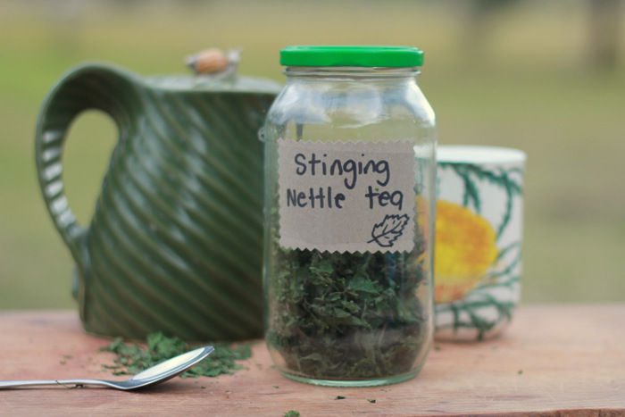 My favourite use for stinging nettle is to make nettle tea. (2)