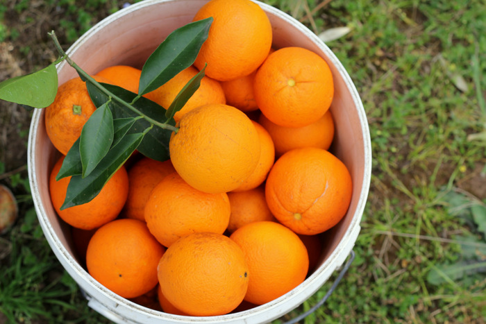 Oranges are at their best in winter