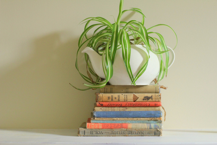 Many houseplants are easy to propagate. Spider plants shoot off teeny plants which can be planted individually. Little eco footprints