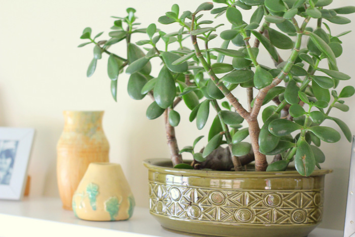Quirky and unique pots for house plants can be made from old teapots and casserole dishes. Little eco footprints.