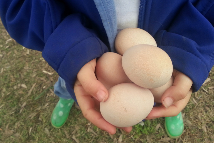Generous chooks. Little eco footprints