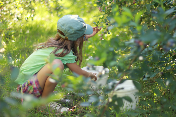 Picking-Bluberries-at-Misty-Valley-Farm-in-the-lower-Hunter-Valley-2. Little eco footprints