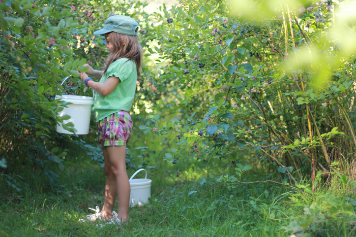 Picking-Bluberries-at-Misty-Valley-Farm-in-the-lower-Hunter-Valley. Little eco footprints