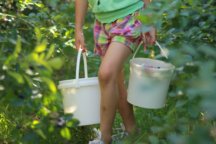 Picking-Bluberries-at-Misty-Valley-Farm-in-the-lower-Hunter-Valley-4. Little eco footprints