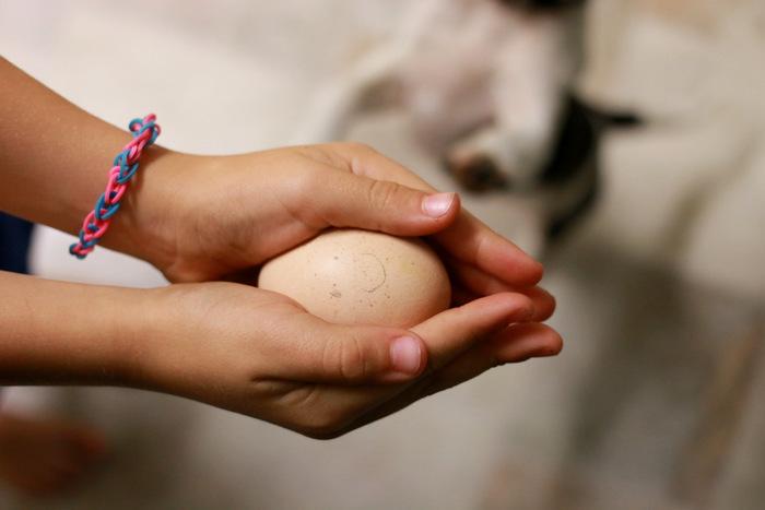 Candling-eggs. Little eco footprints