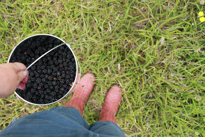 What to wear blackberry picking. Little eco footprints