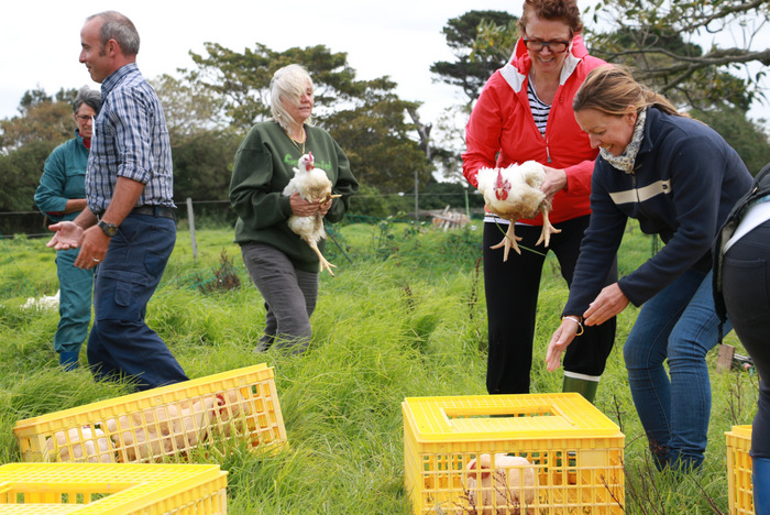 Chicken-day-at-Buena-Vist-Farm. Little eco footprints