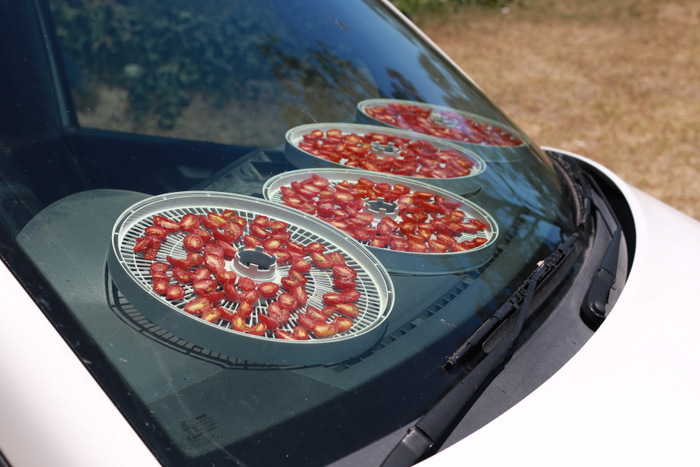Sun-drying-tomatoes-on-car-dashboard. little eco footprints