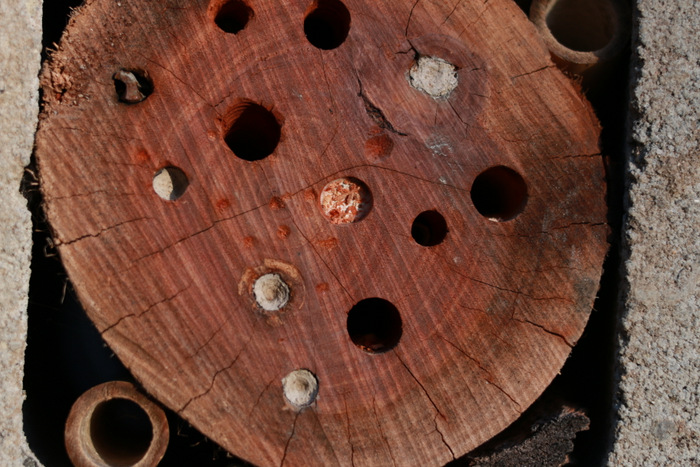 Bee Friendly To Native Bees How To Build A Solitary Bee
