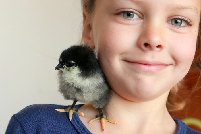 A proud Little Eco and Zippy, the first chicken to hatch. Little eco footprints