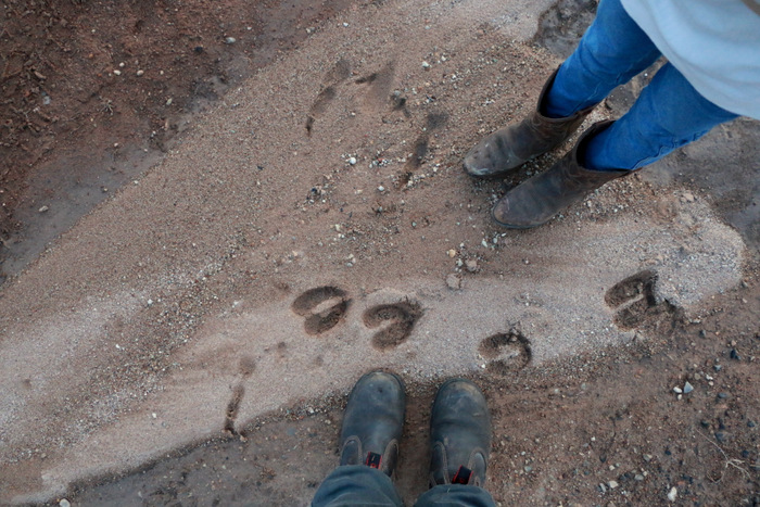 Exploring. Little eco footprints