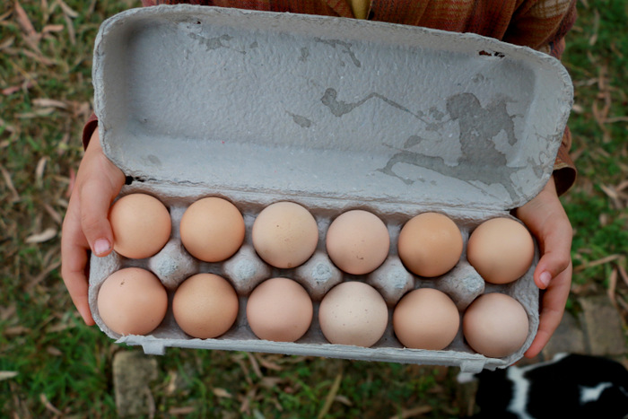 Raising-chickens-from-eggs-Little eco footprints