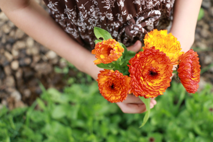 How to grow and use Calendula flowers. Little eco footprints