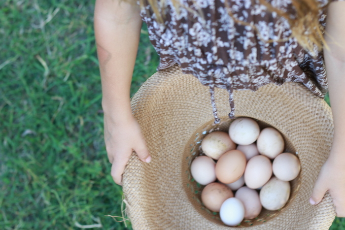 Happiness is not collecting the eggs for a day and feeling rich when collecting two days worth of eggs. Little eco footprints