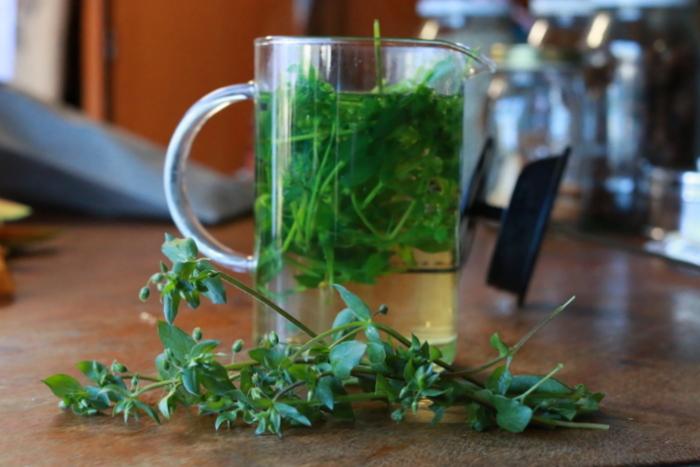 Chickweed tea. Little eco footprints