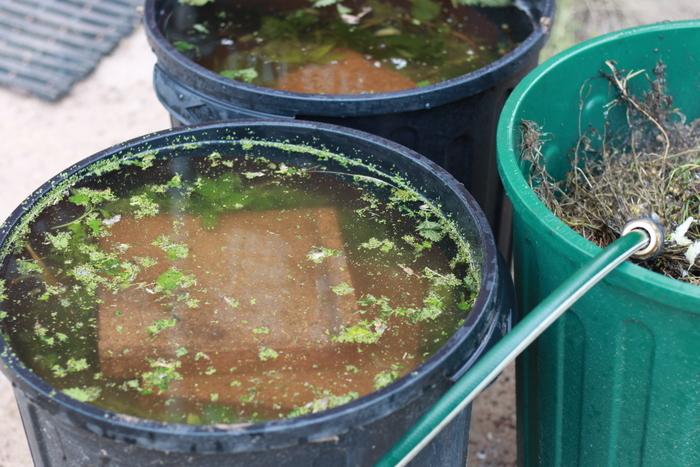 How to make weed tea fertiliser. Little eco footprints
