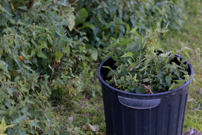 A bucket of nettle about to be made into a bucket of weed tea - a free liquid fertiliser. Little eco footprints