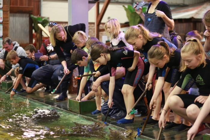 Irukandji Shark and Ray Encounters aqua nursery pool. Little eco footprints