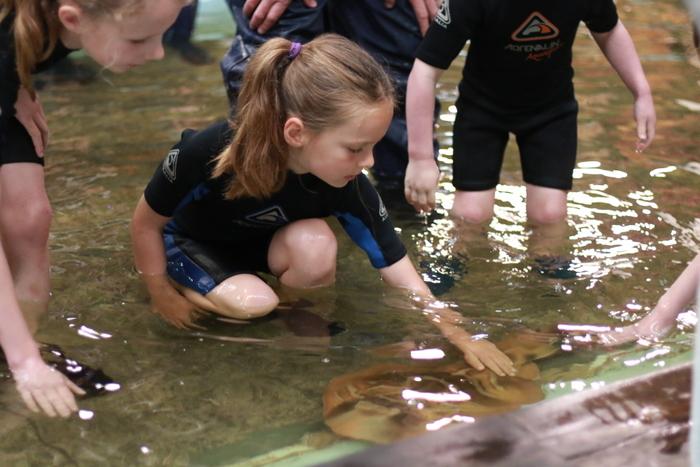 Irukandji Shark and Ray Encounters Fiddlers Flat Little eco footprints