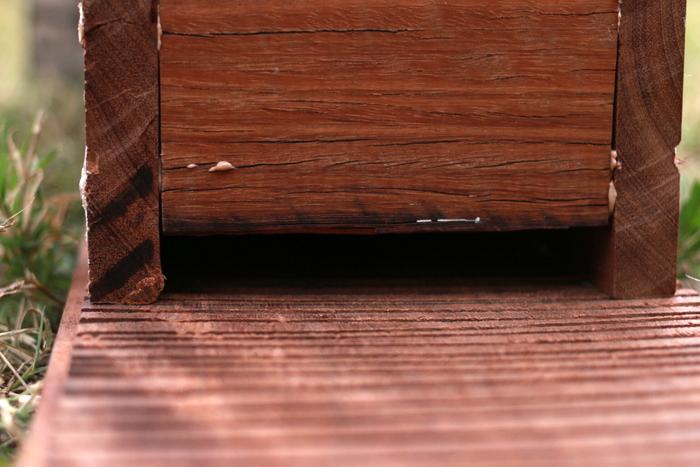 Microbat_roost_box_entrance_Milkwood