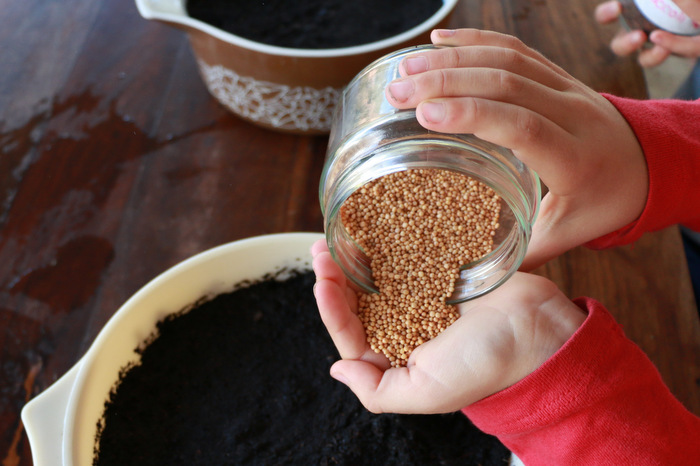 Sowing mustard seeds. Growing microgreens. Little eco footprints